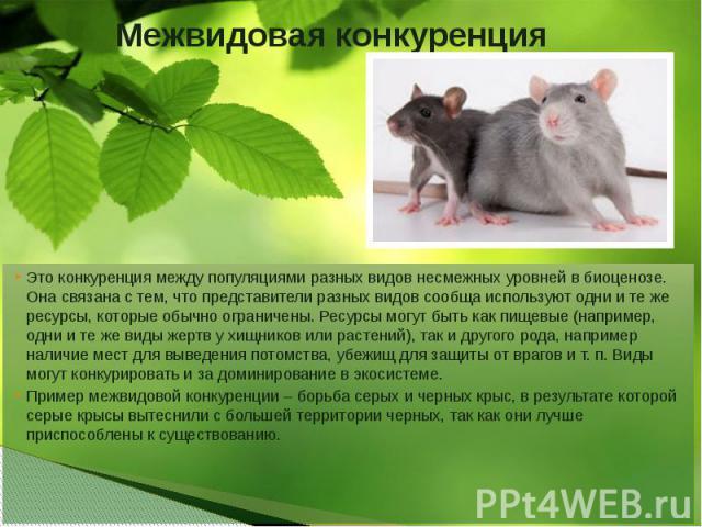 Межвидовая конкуренция Это конкуренция между популяциями разных видов несмежных уровнейвбиоценозе. Она связана с тем, что представители разных видов сообща используют одни и те же ресурсы, которые обычно ограничены. Ресурсы могут быть как пищевые …