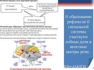 В образовании рефлексов II сигнальной системы участвуют лобные доли и мозговые ц