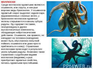 МОЛЛЮСКИ Среди моллюсков ядовитыми являются осьминоги, или спруты, и нек-рые мор