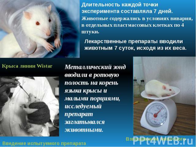 Длительность каждой точки эксперимента составляла 7 дней. Животные содержались в условиях вивария, в отдельных пластмассовых клетках по 4 штуки Лекарственные препараты вводили животным 7 суток, исходя из их веса. Металлический зонд вводили в ротовую…