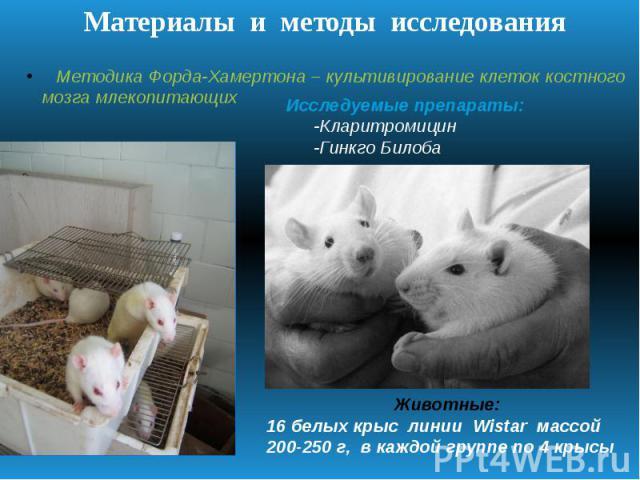 Материалы и методы исследования Методика Форда-Хамертона – культивирование клеток костного мозга млекопитающих Исследуемые препараты: -Кларитромицин -Гинкго Билоба Животные: 16 белых крыс линии Wistar массой 200-250 г, в каждой группе по 4 крысы