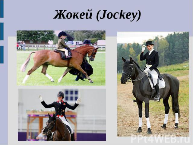 Жокей (Jockey)