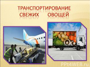 Транспортирование Свежих овощей