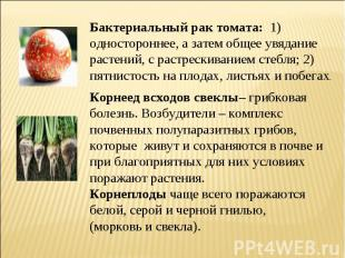 Бактериальный рак томата: 1) одностороннее, а затем общее увядание растений, с р