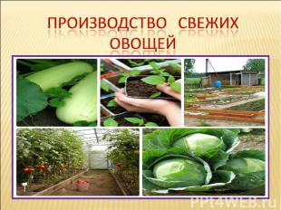 Производство свежих овощей