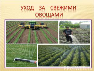 Уход за свежими овощами
