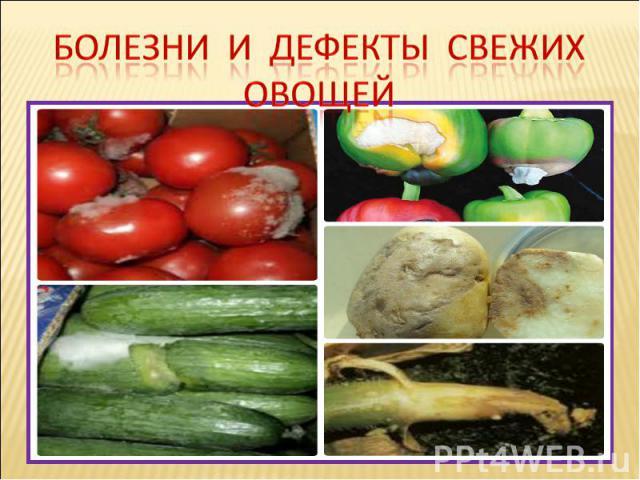 Болезни И дефекты свежих овощей