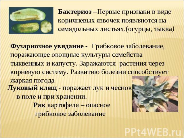 Бактериоз –Первые признаки в виде коричневых язвочек появляются на семядольных листьях.(огурцы, тыква) Фузариозное увядание - Грибковое заболевание, поражающее овощные культуры семейства тыквенных и капусту. Заражаются растения через корневую систем…