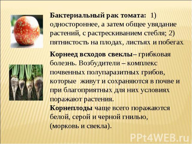 Бактериальный рак томата: 1) одностороннее, а затем общее увядание растений, с растрескиванием стебля; 2) пятнистость на плодах, листьях и побегах. Корнеед всходов свеклы– грибковая болезнь. Возбудители – комплекс почвенных полупаразитных грибов, ко…