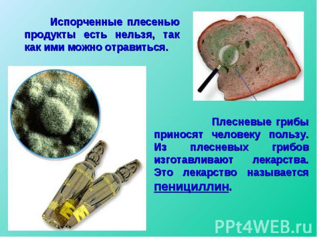 Испорченные плесенью продукты есть нельзя, так как ими можно отравиться. Плесневые грибы приносят человеку пользу. Из плесневых грибов изготавливают лекарства. Это лекарство называется пенициллин.