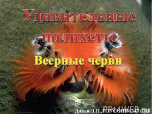 Удивительные полихеты Веерные черви Дикая Л.Н.,ГОУСОШ№347 СПб