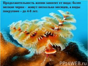Продолжительность жизни зависит от вида: более мелкие черви - живут несколько ме