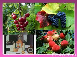 Виноград Вишня из своего сада Персики