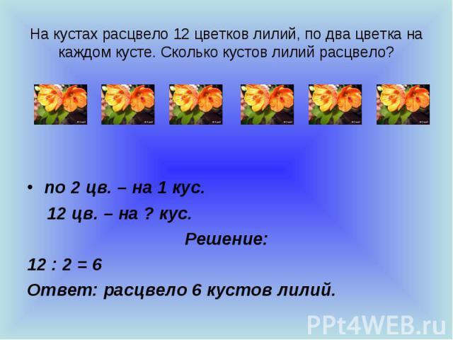 На кустах расцвело 12 цветков лилий, по два цветка на каждом кусте. Сколько кустов лилий расцвело? по 2 цв. – на 1 кус. 12 цв. – на ? кус. Решение: 12 : 2 = 6 Ответ: расцвело 6 кустов лилий.