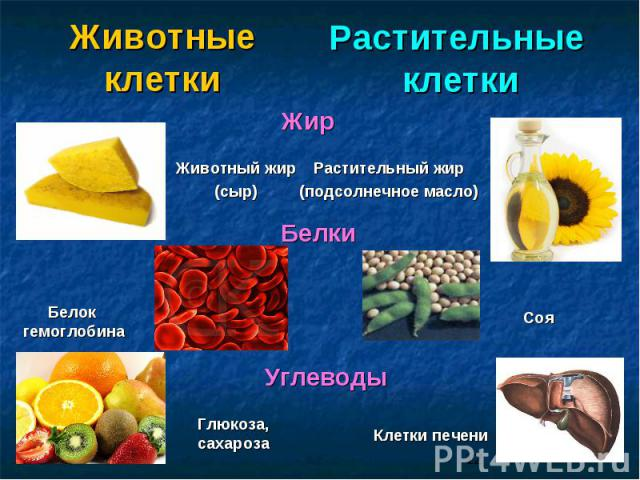 Животные клетки Растительные клетки Животный жир (сыр) Растительный жир (подсолнечное масло) Белок гемоглобина Глюкоза, сахароза Клетки печени