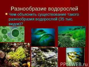 Разнообразие водорослей Чем объяснить существование такого разнообразия водоросл