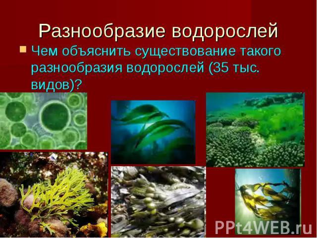 Разнообразие водорослей Чем объяснить существование такого разнообразия водорослей (35 тыс. видов)?
