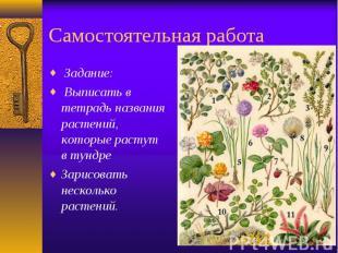 Самостоятельная работа Задание: Выписать в тетрадь названия растений, которые ра