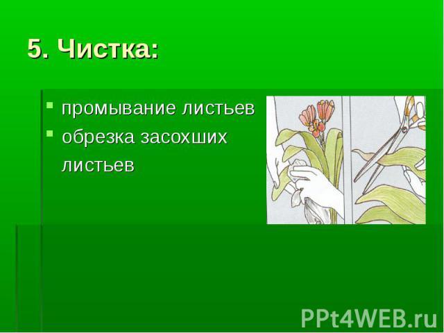 5. Чистка: промывание листьев обрезка засохших листьев
