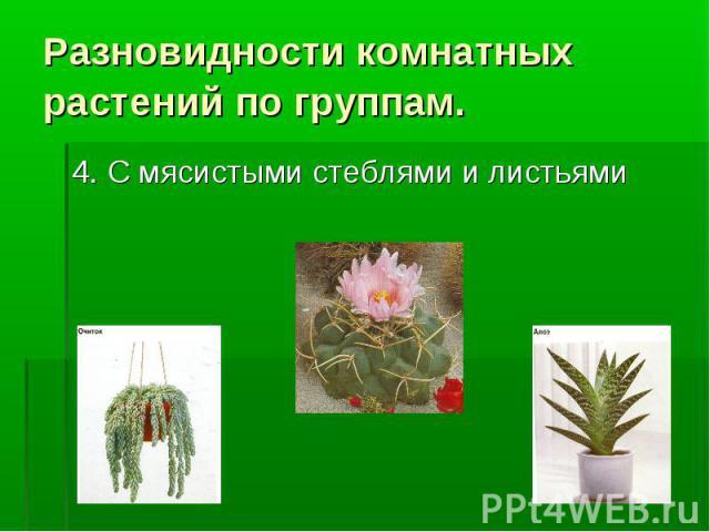 Разновидности комнатных растений по группам. 4. С мясистыми стеблями и листьями