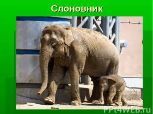 Слоновник