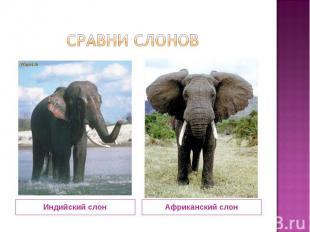 сравни слонов Индийский слон Африканский слон