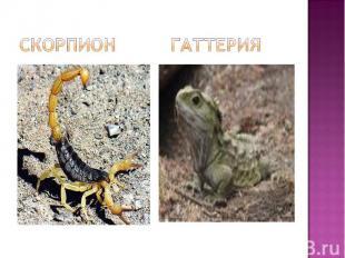 Скорпион гаттерия