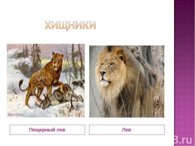 хищники Пещерный лев Лев