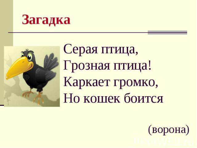 Загадка Серая птица, Грозная птица! Каркает громко, Но кошек боится