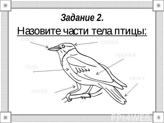 Задание 2. Назовите части тела птицы: