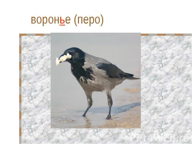 воронье (перо)