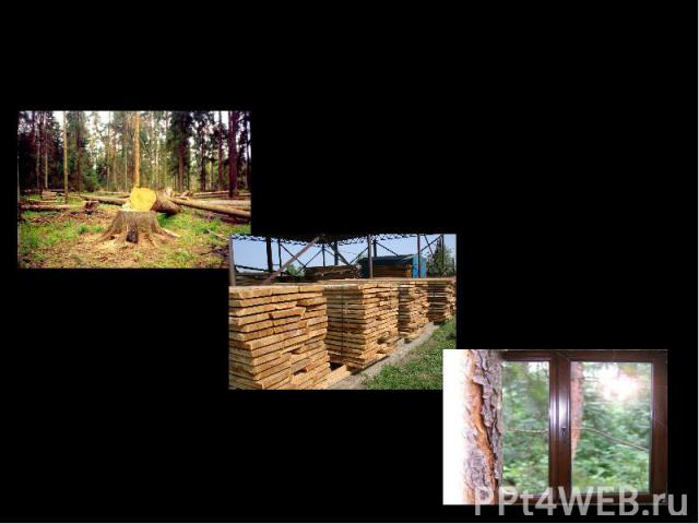 Свойства древесины и её применение