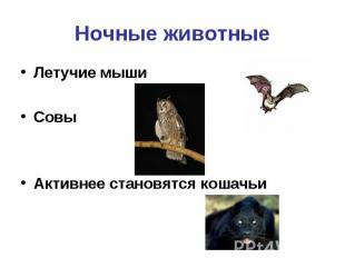 Ночные животные Летучие мыши Совы Активнее становятся кошачьи