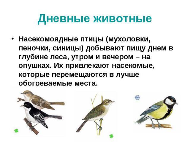 Дневные животные Насекомоядные птицы (мухоловки, пеночки, синицы) добывают пищу днем в глубине леса, утром и вечером – на опушках. Их привлекают насекомые, которые перемещаются в лучше обогреваемые места.
