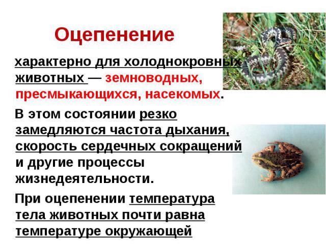 Оцепенение характерно для холоднокровных животных — земноводных, пресмыкающихся, насекомых. В этом состоянии резко замедляются частота дыхания, скорость сердечных сокращений и другие процессы жизнедеятельности. При оцепенении температура тела животн…
