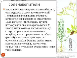 Растения-соленакопители могут всасывать воду из засоленной почвы, если содержат