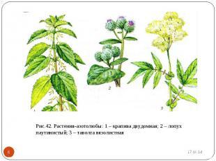 Рис.42. Растения-азотолюбы: 1 – крапива двудомная; 2 – лопух паутинистый; 3 – та