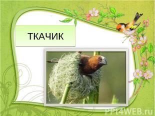 ТКАЧИК