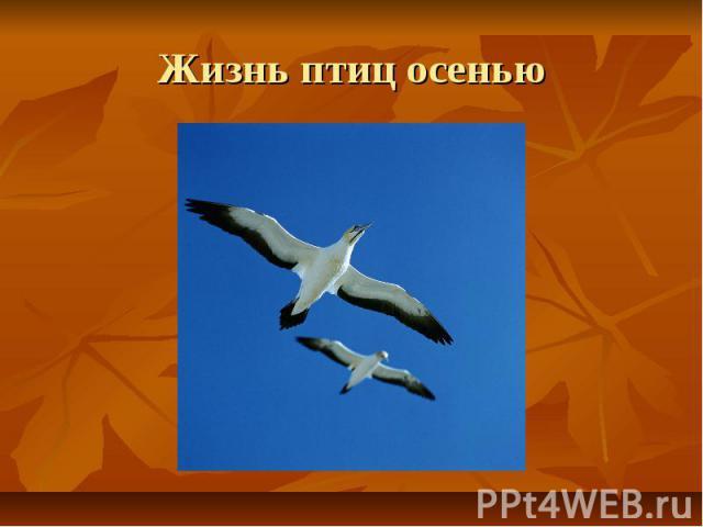 Жизнь птиц осенью
