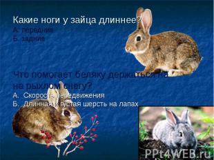 Какие ноги у зайца длиннее? А. передние Б. задние Что помогает беляку держаться
