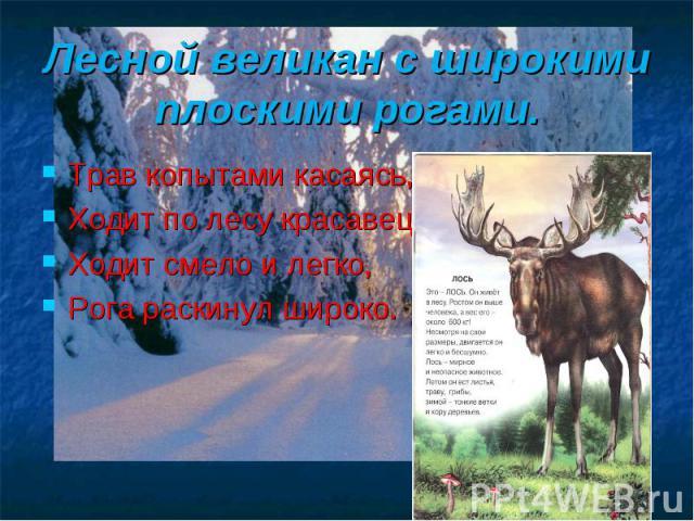 Лесной великан с широкими плоскими рогами. Трав копытами касаясь, Ходит по лесу красавец, Ходит смело и легко, Рога раскинул широко.
