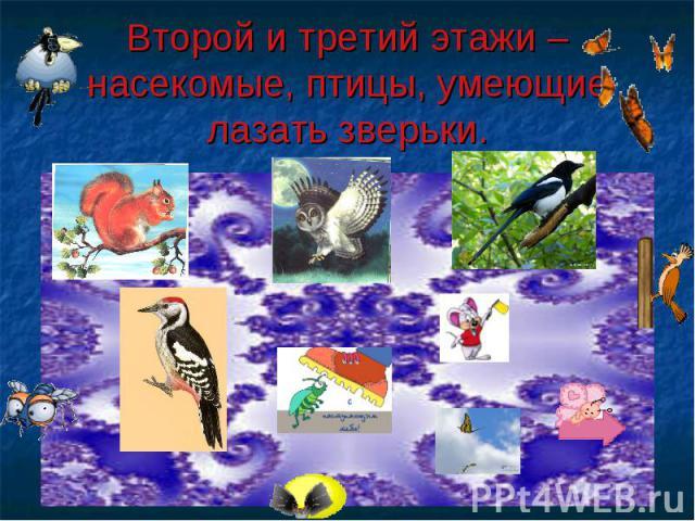 Второй и третий этажи – насекомые, птицы, умеющие лазать зверьки.