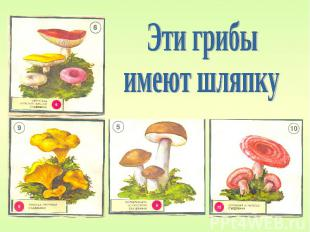Эти грибы имеют шляпку
