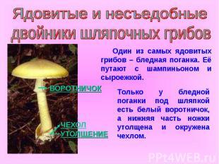 Ядовитые и несъедобные двойники шляпочных грибов Один из самых ядовитых грибов –