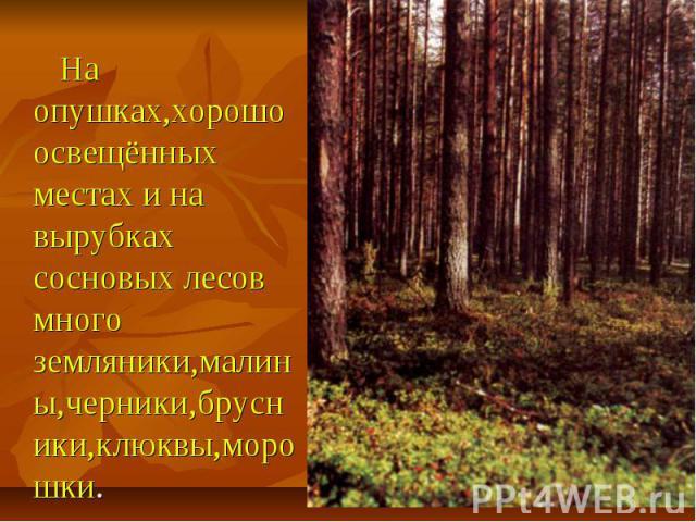 На опушках,хорошо освещённых местах и на вырубках сосновых лесов много земляники,малины,черники,брусники,клюквы,морошки.