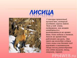 Лисица У лисицы пушистый густой мех, который особенно хорош зимой. Тело у неё оч