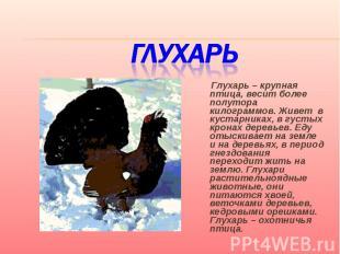 Глухарь Глухарь – крупная птица, весит более полутора килограммов. Живет в куста