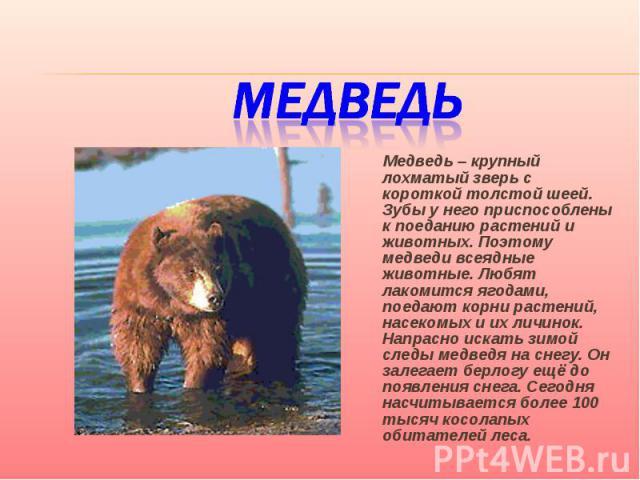Медведь Медведь – крупный лохматый зверь с короткой толстой шеей. Зубы у него приспособлены к поеданию растений и животных. Поэтому медведи всеядные животные. Любят лакомится ягодами, поедают корни растений, насекомых и их личинок. Напрасно искать з…