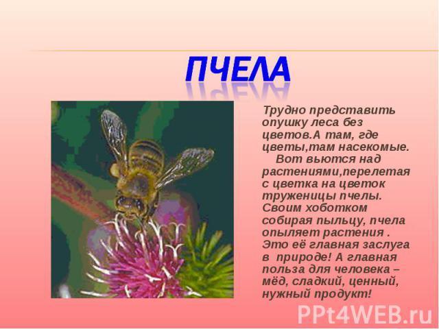 Пчела Трудно представить опушку леса без цветов.А там, где цветы,там насекомые. Вот вьются над растениями,перелетая с цветка на цветок труженицы пчелы. Своим хоботком собирая пыльцу, пчела опыляет растения . Это её главная заслуга в природе! А главн…