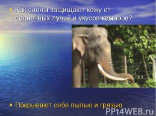 Как слоны защищают кожу от солнечных лучей и укусов комаров? Покрывают себя пыль